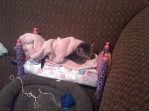 Nibbles sleeping in a doll's bed